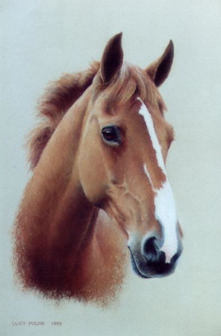 Lucy Milne Portraits Portraits of Horses, Dogs, Children, Adults by Commission--